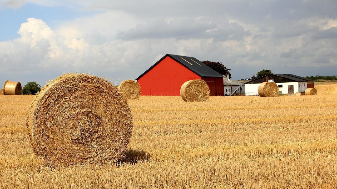 Svenska bönder kan bli förlorare när EU drar ner på stöd.