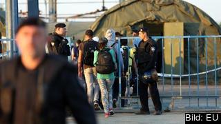 Migranter går över gränsen från Serbien till Kroatien.