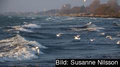 2007 enades de nio länderna med kust mot Östersjön om att till år 2021 vidta en rad åtgärder för att förbättra havsmiljön. Arkivbild.