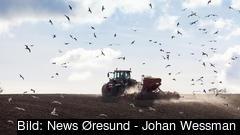 Fel i Jordbruksverkets it-system har lett till att lantbrukare antingen kunnat få för mycket, för lite eller för sent utbetalt EU-stöd. Arkivbild.